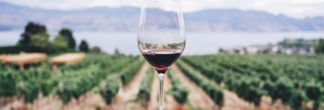 E-commerce per il settore vitivinicolo dell'Emilia Romagna